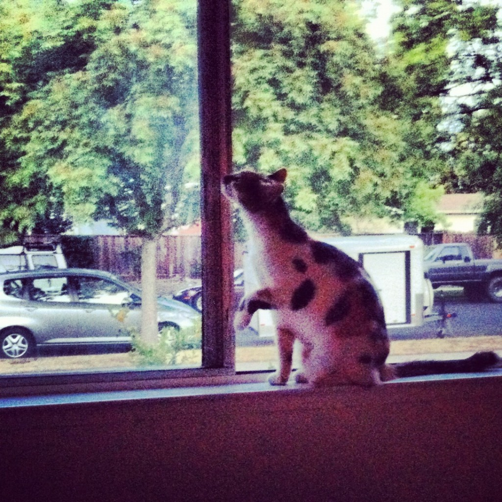 Callie in the window